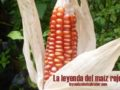 La leyenda del maíz rojo