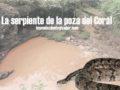 La serpiente de la poza del Coral